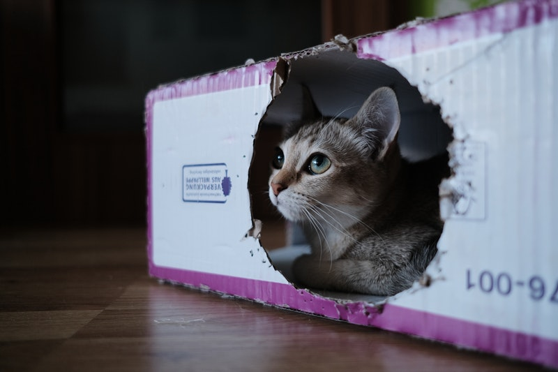 6 Tips For Moving With Pets_Stuff It Inn Storage_moving with pets_Columbia TN